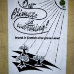 our climate is warming, invest in scottish olive groves now