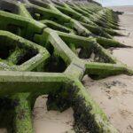Groyne against sea wall breakwater