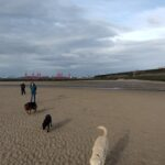 Dogs and Friends on beach